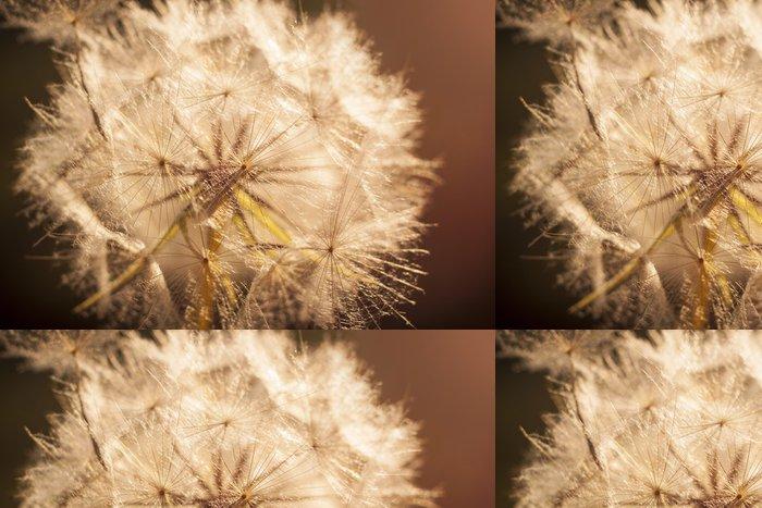 Tapeta Pixerstick Květina Pampeliška. Close-up - Témata