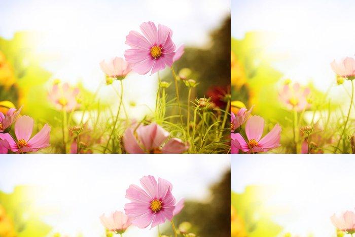 Vinylová Tapeta Květina pole - Květiny