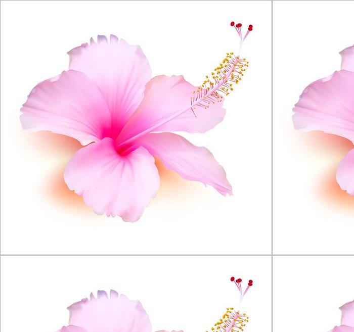 Tapeta Pixerstick Květina vektor. Hibiscus tropických rostlin příroda ilustrace - Květiny