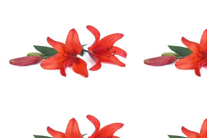 Vinylová Tapeta Květiny červená lilie na bílém pozadí - Květiny