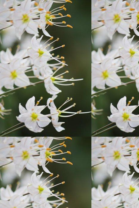 Tapeta Pixerstick Květiny kontrast pozadí - Květiny