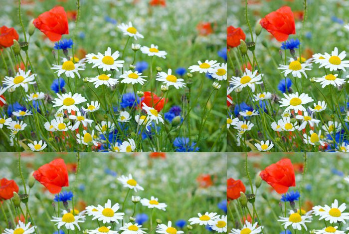 Tapeta Pixerstick Květiny wildflower louka -