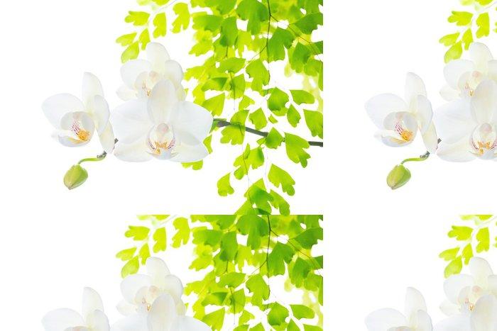 Tapeta Pixerstick Kvetoucí bílá orchidej s listy kapradí, izolovaných na bílém zpět - Květiny