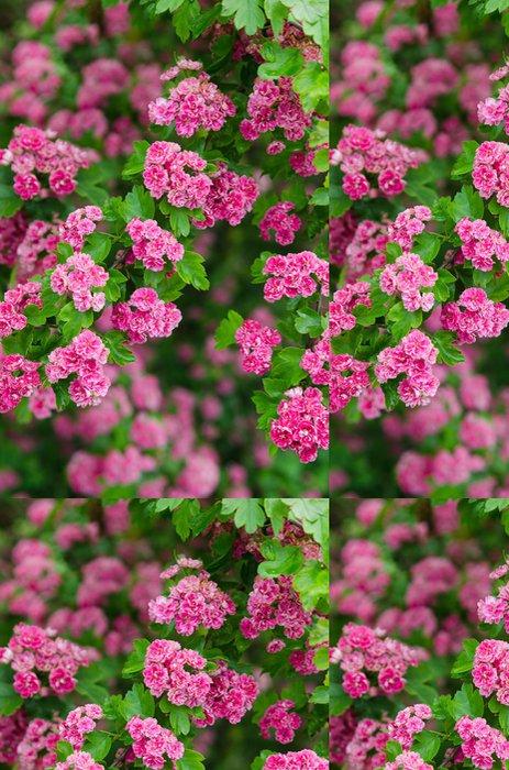 Vinylová Tapeta Kvetoucí hloh, close-up - Květiny