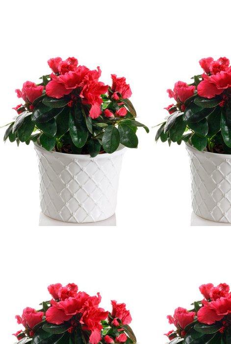 Tapeta Pixerstick Kvetoucí rostlina azalky v hrnci - Domov a zahrada