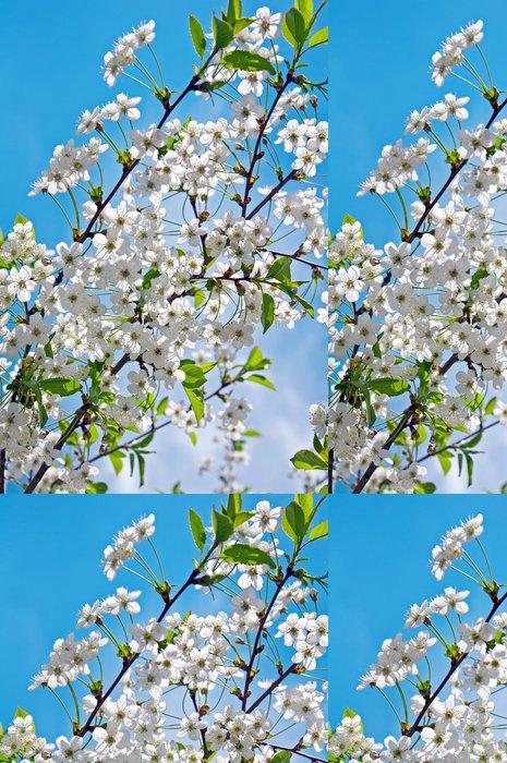 Tapeta Pixerstick Kvetoucí třešňové větvičky na jaře - Témata