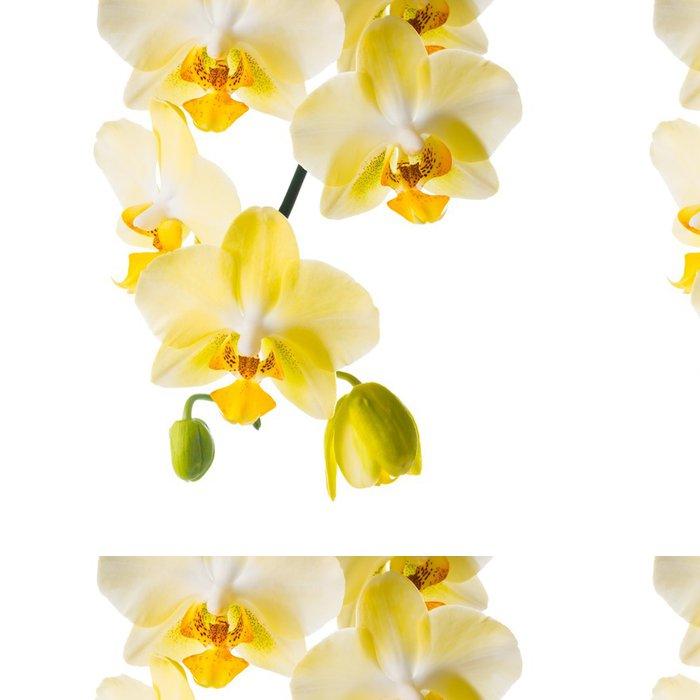 Vinylová Tapeta Kvetoucí větve žluté orchideje, Phalaenopsis je izolovaná na wh - Květiny