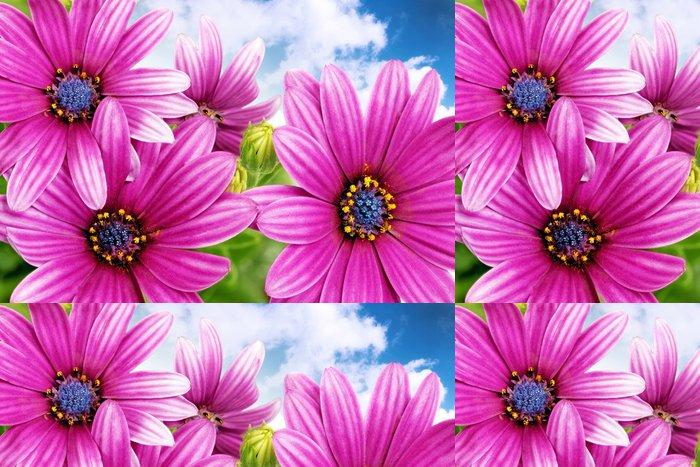 Tapeta Pixerstick Květy Gazania proti modré obloze. (Splendens rod Asteraceae - Květiny