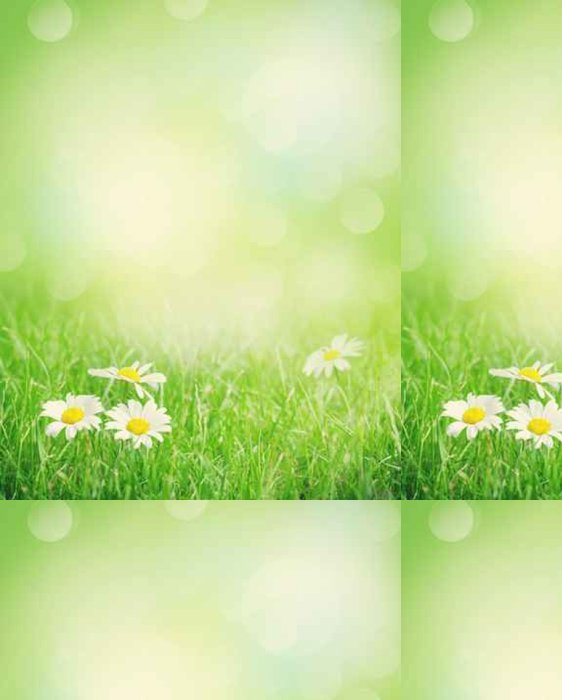 Tapeta Pixerstick Květy heřmánku na poli tráva - Krajiny