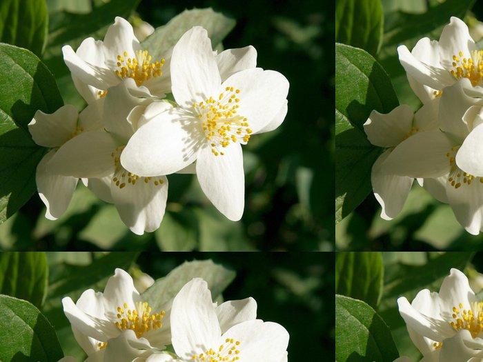 Tapeta Pixerstick Květy jasmínu - Květiny