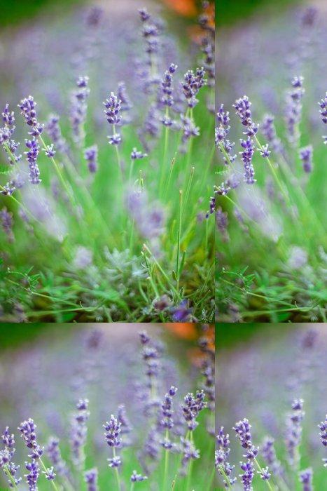 Tapeta Pixerstick Květy levandule - Květiny