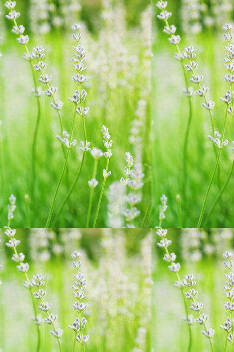 Tapeta Pixerstick Květy levandule - Svoboda