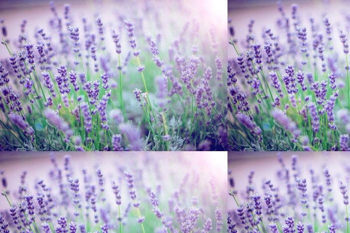 Tapeta Pixerstick Květy levandule - Témata