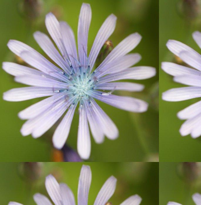 Tapeta Pixerstick Laitue vivace - Květiny