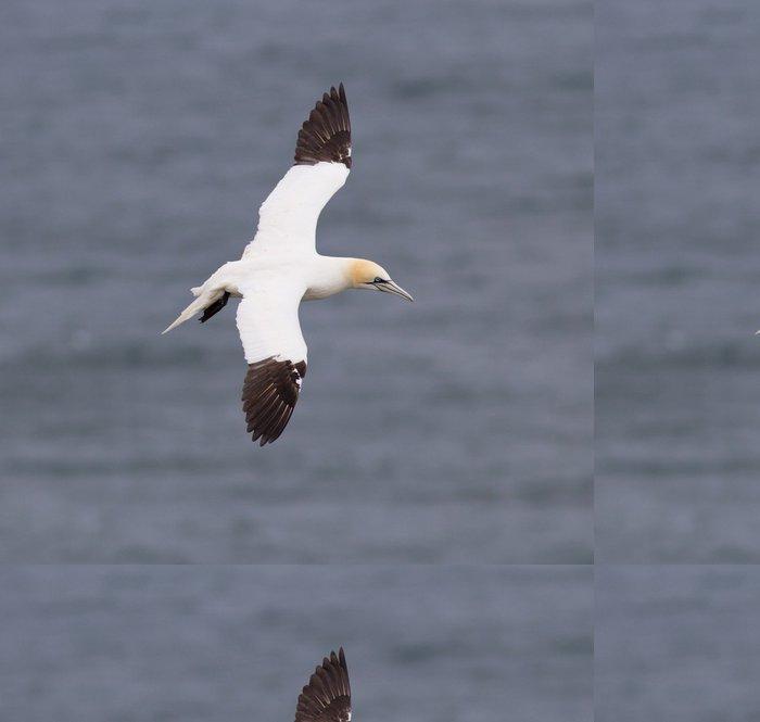 Tapeta Pixerstick Lakomec v letu - Ptáci