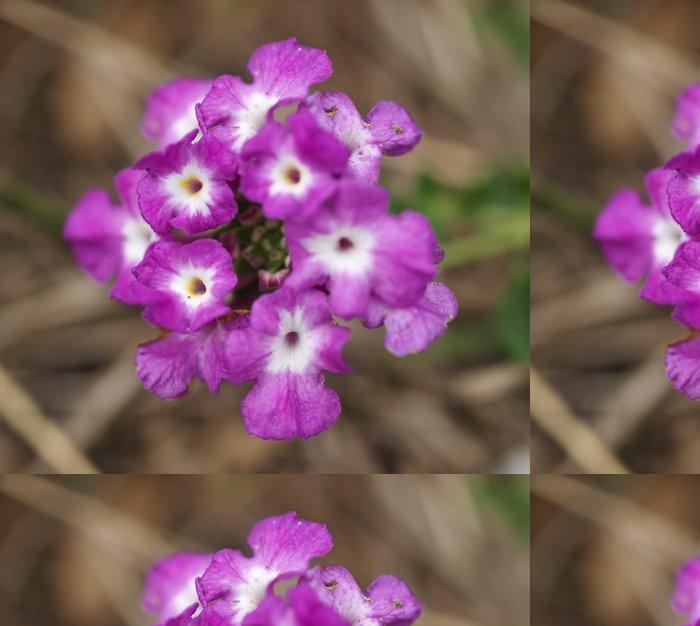 Vinylová Tapeta Lantana montevidensis škodlivý plevel v Austrálii - Květiny