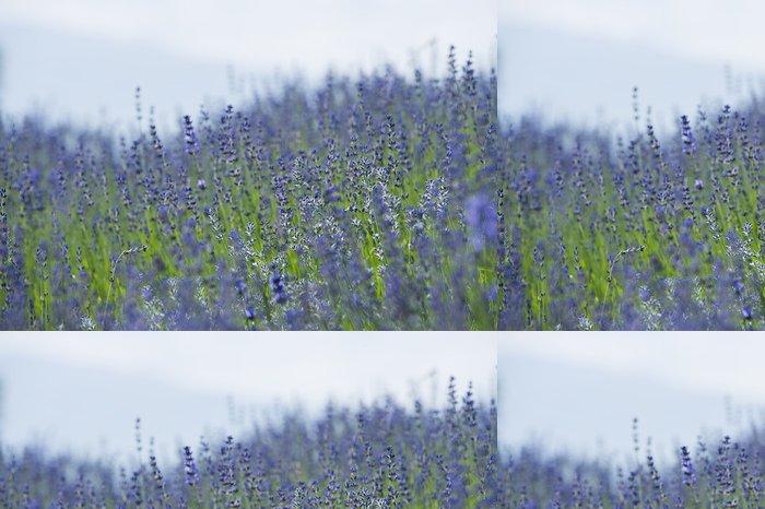 Tapeta Pixerstick Lavender - Květiny