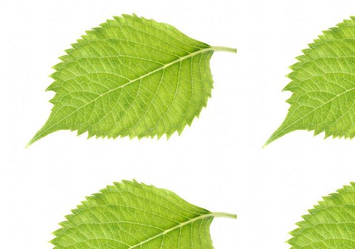 Tapeta Pixerstick Leaf Hydrangea - Rostliny