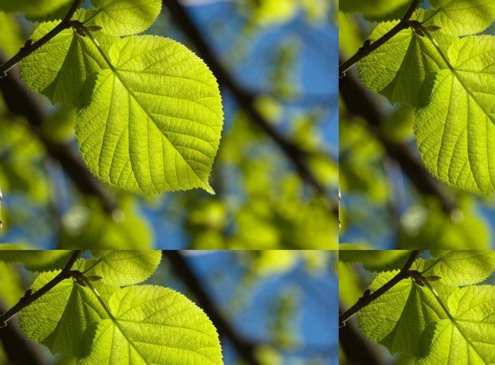 Tapeta Pixerstick Leaf V podsvícený - Stromy