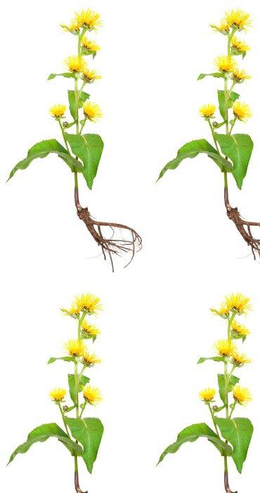 Tapeta Pixerstick Léčivé rostliny. Oman pravý (Inula helenium) - Rostliny