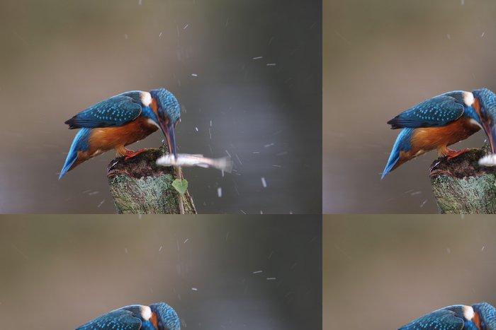 Tapeta Pixerstick Ledňáček říční (Alcedo atthis) - Ptáci