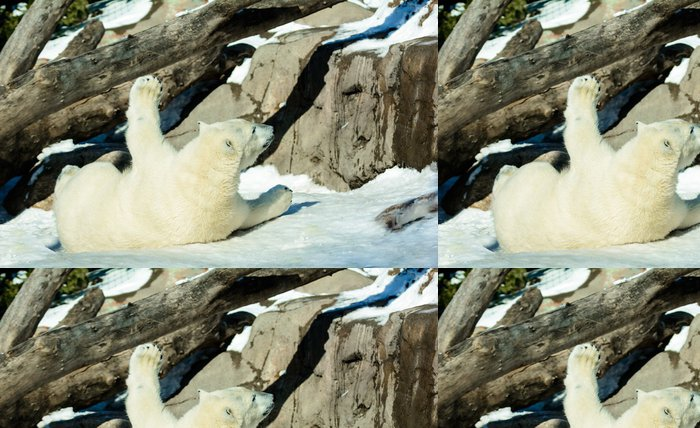 Tapeta Pixerstick Ledový medvěd - Témata
