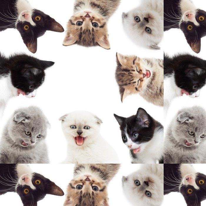 Tapeta Pixerstick Legrační koťata - Savci