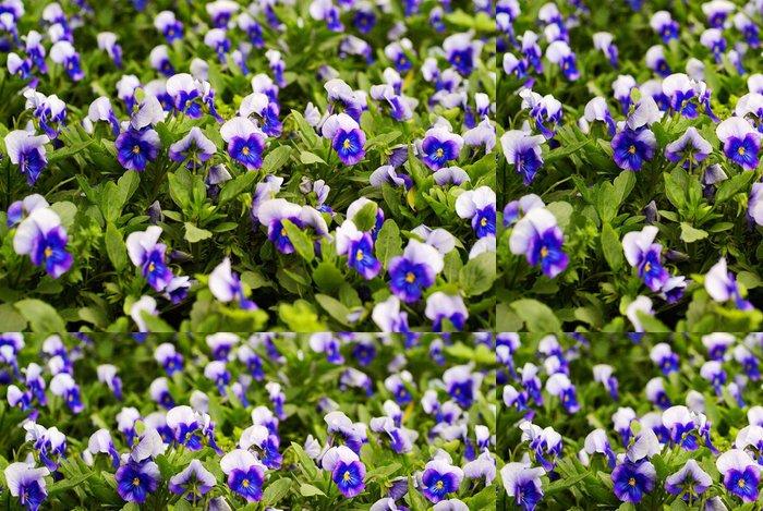 Tapeta Pixerstick Lemovaný duhovka bylina květinová zahrada - Zemědělství