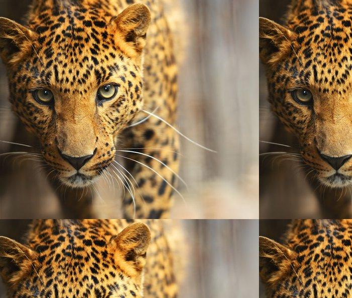 Tapeta Pixerstick Leopard portrét - Savci