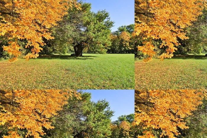 Tapeta Pixerstick Les na podzim - Roční období