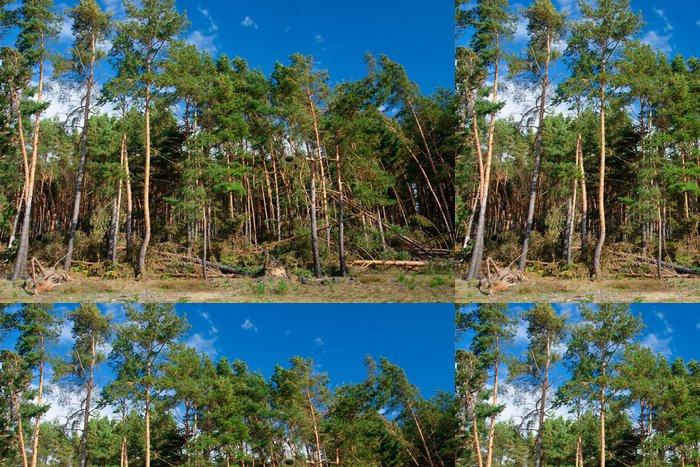 Tapeta Pixerstick Les po hurikánu - Příroda a divočina