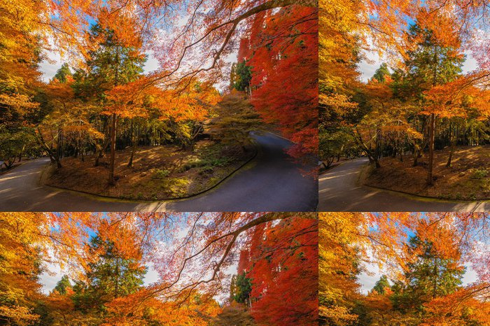 Tapeta Pixerstick Les s podzimní barvy - Asie