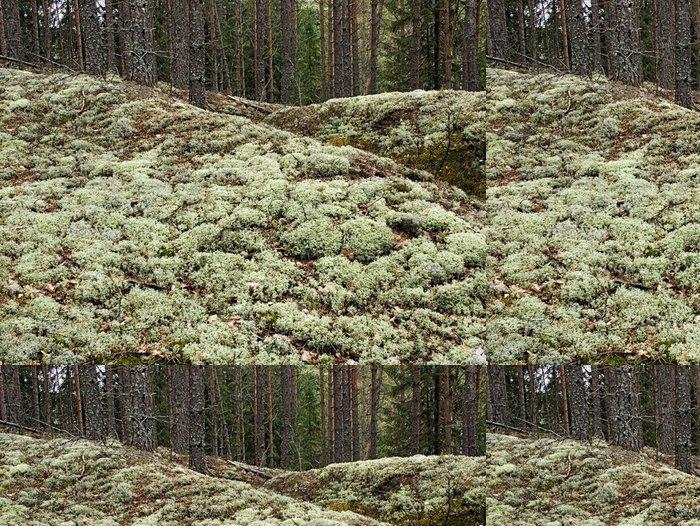 Tapeta Pixerstick Lesní mech - Lesy