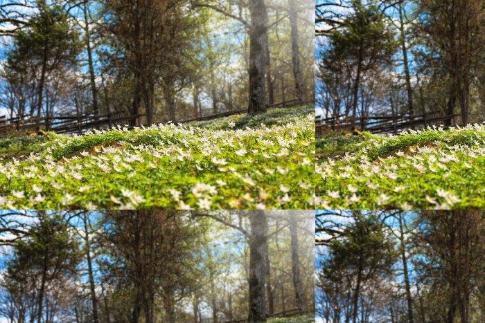 Tapeta Pixerstick Lesní na jaře - Roční období
