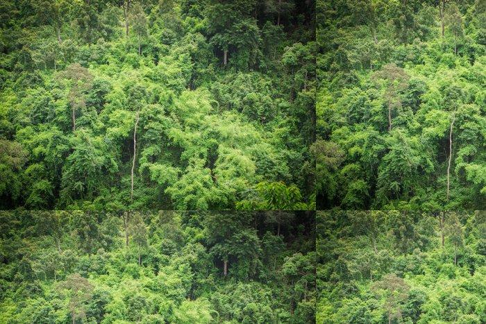 Tapeta Pixerstick Lesní zelené stromy pozadí - Hory