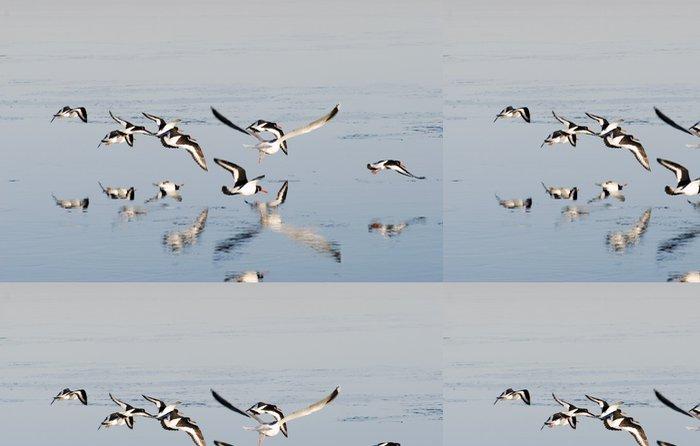 Tapeta Pixerstick Létající Ústřičníci - Ptáci