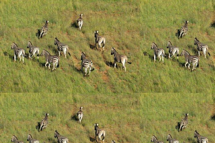 Tapeta Pixerstick Letecký pohled na zebra stepní na pastvinách - Savci