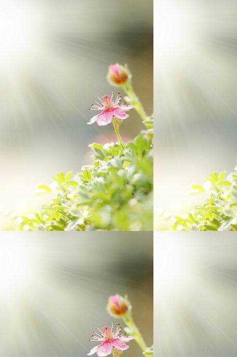 Vinylová Tapeta Letní flower - Roční období