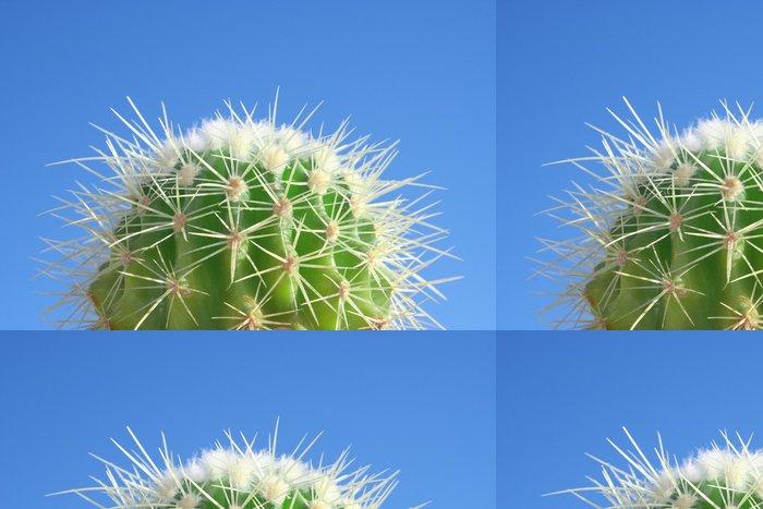 Tapeta Pixerstick Letní kaktus - Rostliny