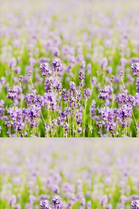 Tapeta Pixerstick Letní levandule květ pole, může být použit jako pozadí, tónovaný - Květiny