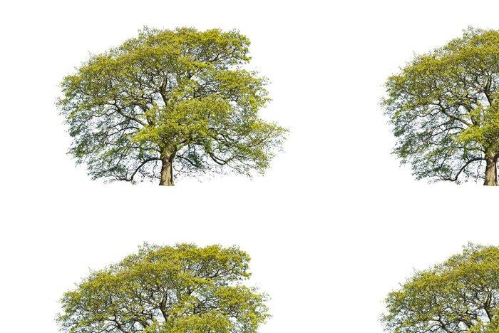 Tapeta Pixerstick Letní strom izolované - Outdoorové sporty