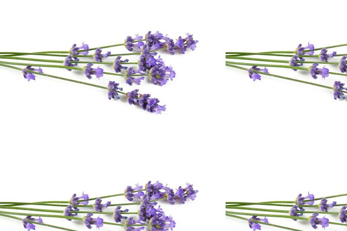 Tapeta Pixerstick Levandule izolovaných na bílém - Zdraví a medicína
