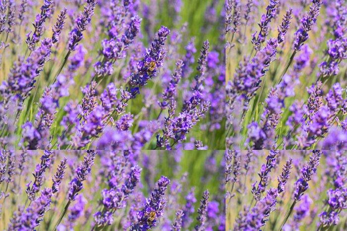 Vinylová Tapeta Levandule květy s včela ve Francii - Témata