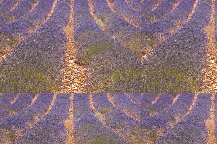 Tapeta Pixerstick Levandule pole na plošině de Valensole v Provence. - Témata