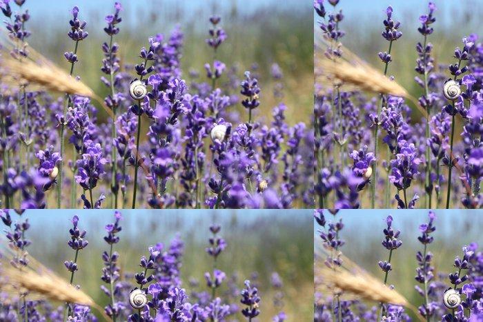 Tapeta Pixerstick Levandule - Květiny