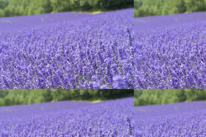 Tapeta Pixerstick Levandulová pole - Květiny