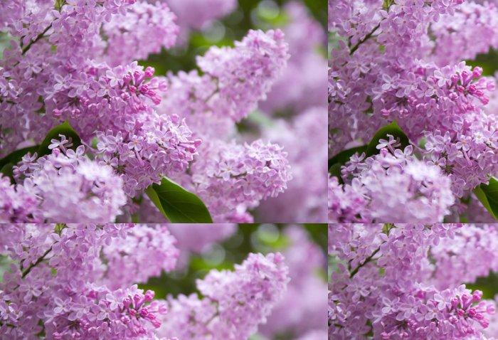 Tapeta Pixerstick Lila fialové květy - Roční období