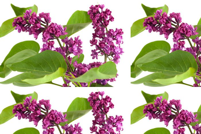 Tapeta Pixerstick Lila květy - Květiny