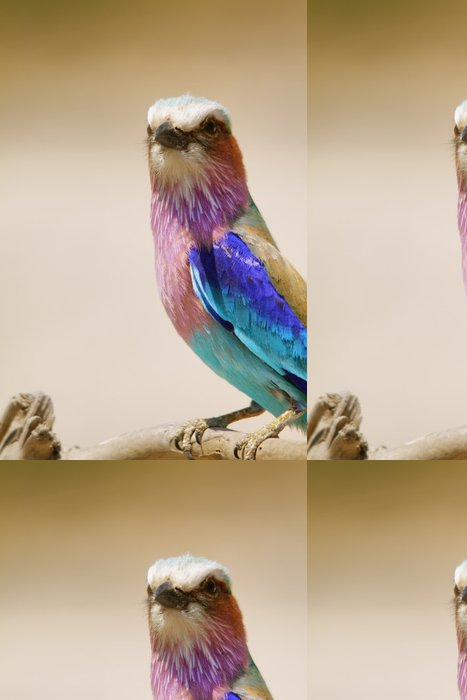 Tapeta Pixerstick Lilac Breasted Roller v Chobe riverfron - Afrika