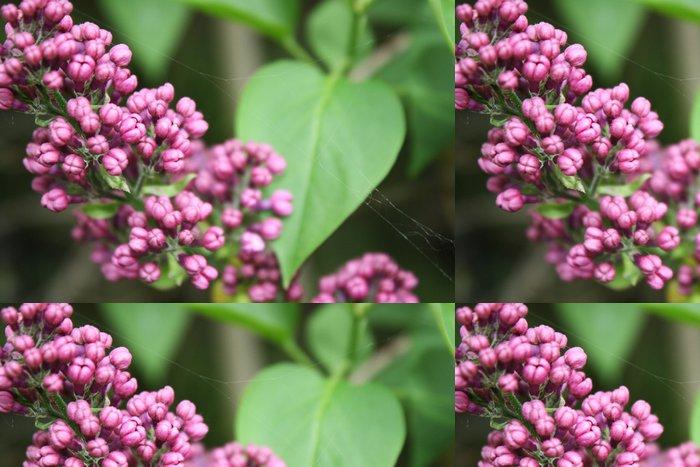 Tapeta Pixerstick Lilac květina - Roční období